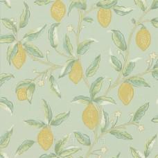 Lemon Tree Sage