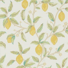 Lemon Tree Bay Leaf